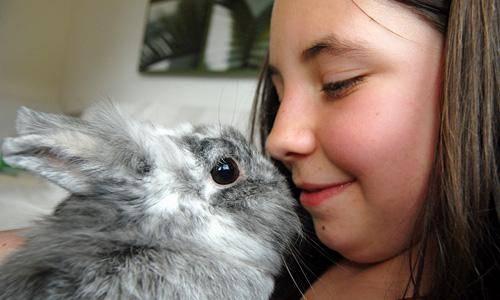 Bramsche Kaninchen Keine Haustiere Fur Kleine Kinder