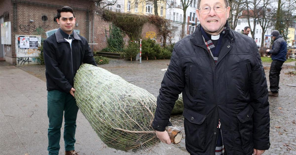 Tannenbaum Netzgerät.Aachen Den Letzten Tannenbaum Beißen Die Ziegen