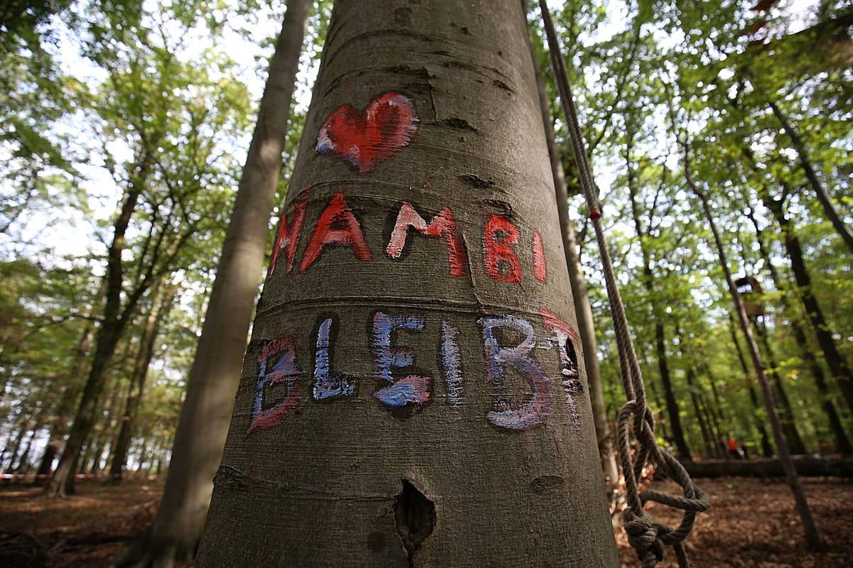 Hambacher Forst Waldspaziergang am Sonntag auch im Eilverfahren abgelehnt